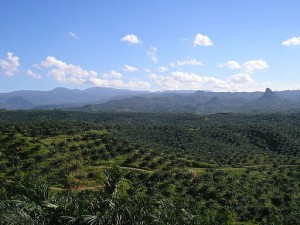 Oil_palm_plantation_Indonesia